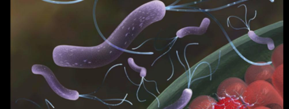 Diagnóstico da infecção por Helicobacter pylori