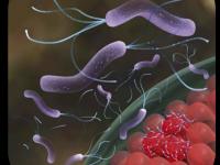 IV Consenso Brasileiro sobre Infecção pelo Helicobacter pylori