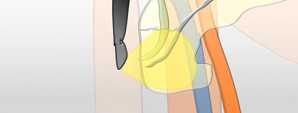 Ecoendoscopia linear da estação duodenal – Exame normal com animação e corroboração anatômica