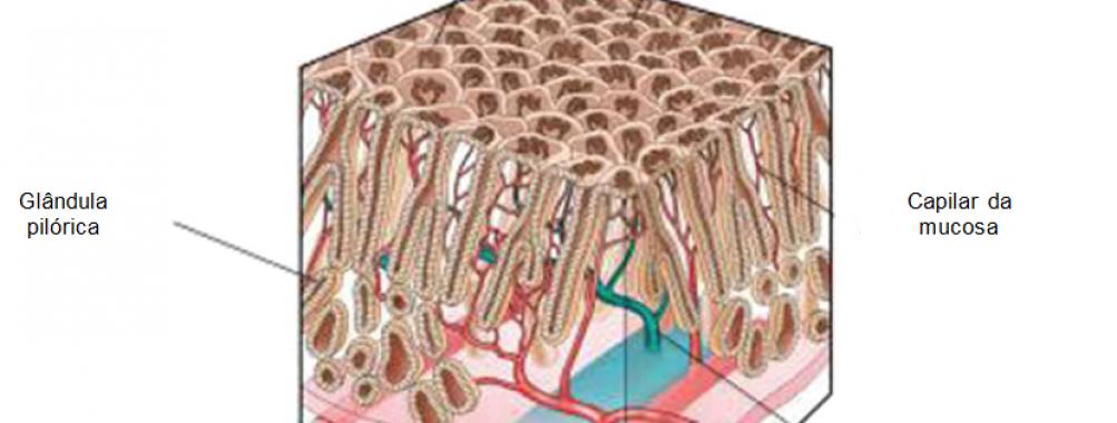 QUIZ! Magnificação endoscópica do estômago